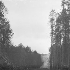 Lumbering operation in the George Watts Hill Demonstration Forest