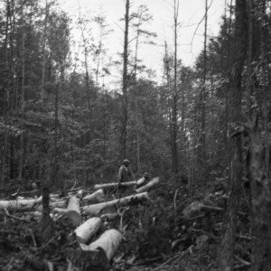 Men working at lumbering operation in the George Watts Hill Demonstration Forest