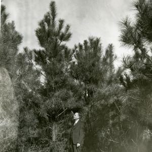 Dr. J.V. Hofmann, Hofmann Forests