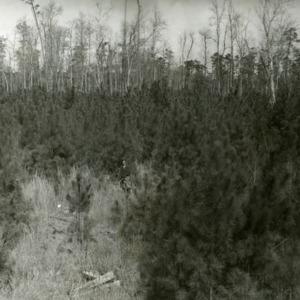 Hofmann Forests
