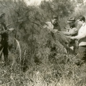Dr. Miller measuring current growth, Hofmann Forest