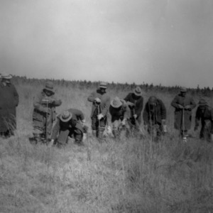 Tree planting by Works Progress Administration (W.P.A) in Old Hofmann Forest