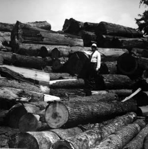 Dr. Hofmann and logs from Cypress Creek at Hofmann Forest