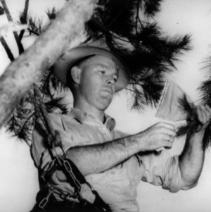 Forestry Student examines pine tree