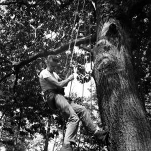 Forestry Students examine tree