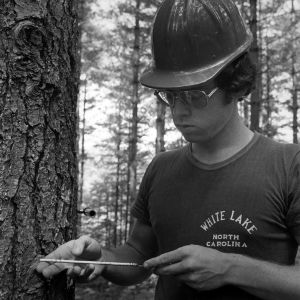 Forestry student examines tree