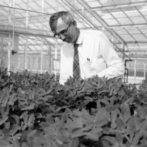 Dr. Walton Gregory conducting research on peanuts