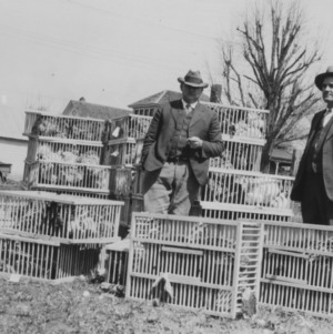 County agent W. Kerr Scott at Alamance farmers' poultry sale