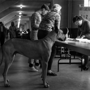 Dog at student registration