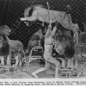 Lion trainer Jewell New at Ringling Brothers and Barnum and Bailey Circus