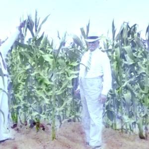 Two men in a cornfield