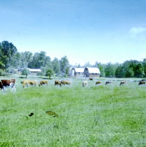 Farm - barns and field with cows