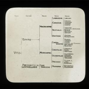 Chart of grape names