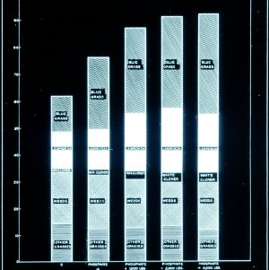 Chart - Effect of rate of limestone on total plant cover and species - June 1940 Counts