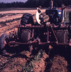 De-Vining Sweet Potatoes, 1967 - 1973