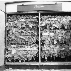 Bulk curing tobacco