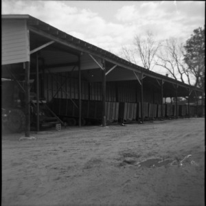 Peanut curing in wagons