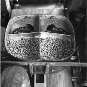 Cole planter being used for peanuts