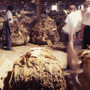 Packaging - Conventional Field Scenes, Tobacco: Packaging Auction, 1967
