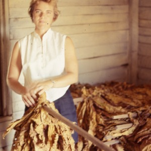Packaging - Conventional Field Scenes, Tobacco: Pack House R.W., 1965-1968
