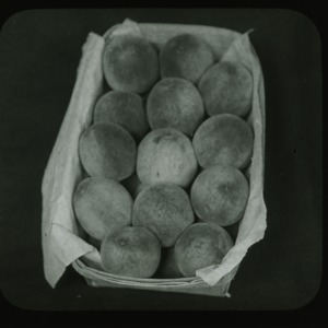 Basket of peaches, circa 1900