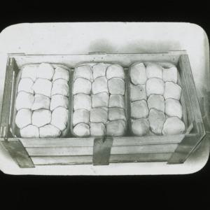 Peaches in carrier, circa 1900