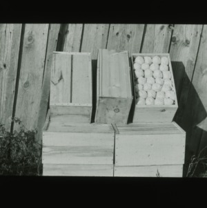 Crates of Peaches, circa 1910
