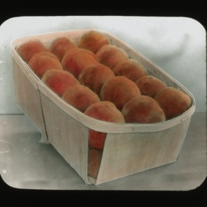 Basket of peaches, colorized, circa 1910