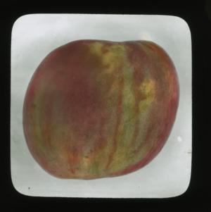 Peach, colorized, circa 1910