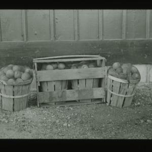 Baskets of peaches, circa 1910