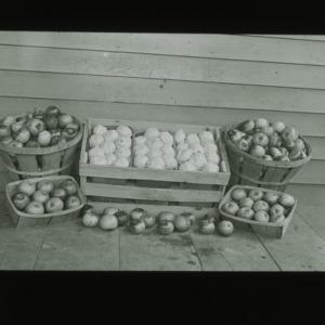 Apples, circa 1910