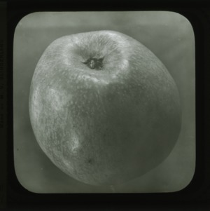 Albemarle Pippin apple, circa 1900