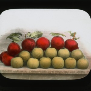 Hoover and Grimes apples, colorized, circa 1910