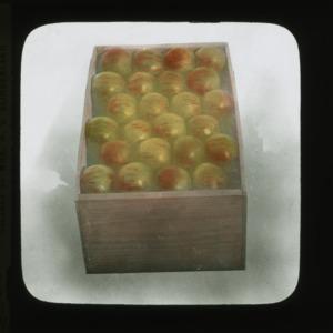 Box of Nickajack apples, colorized, circa 1910