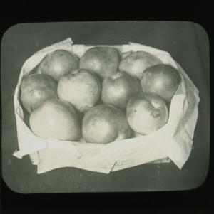 Pears in basket, circa 1900
