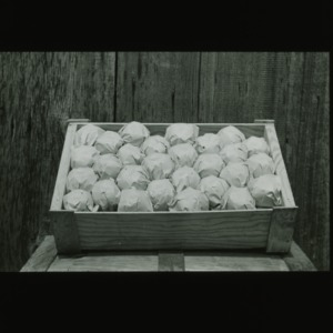 Pears in crate, circa 1910