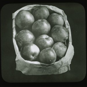 Early harvest pears, circa 1900