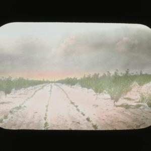 Harvest field, colorized, circa 1900