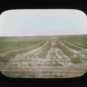 Harvest field, colorized, circa 1910