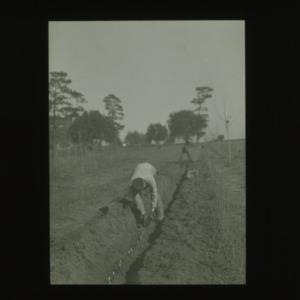 Man tending field, circa 1910