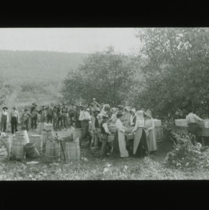People sorting apples in mountains, circa 1910