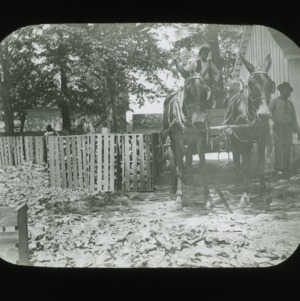 Crating cabbage, circa 1900