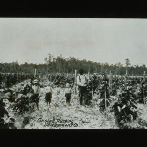 Children and man in field for Carolina Trucking Development Company, circa 1910