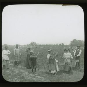 Group picking strawberries in North Carolina, circa 1910