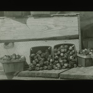 Baskets of strawberries, circa 1900