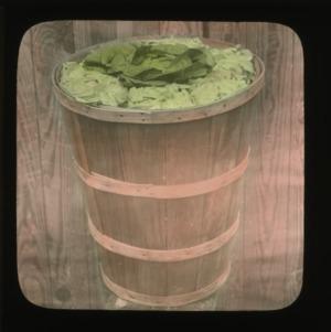 Barrel of lettuce, colorized, circa 1910