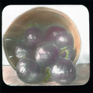 Eggplants in basket, colorized, circa 1910