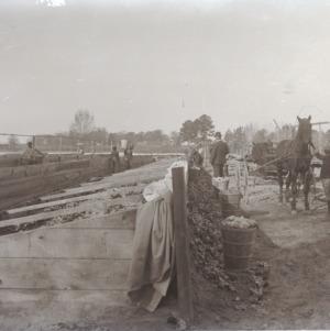 Harvesting lettuce, circa 1910