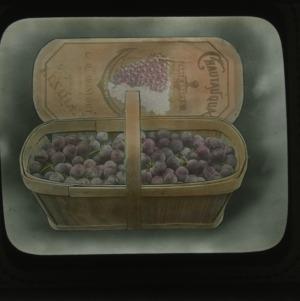 Chautauqua table grapes, colorized, circa 1910