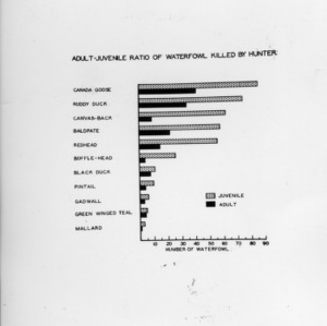 Adult-Juvenile Ratio of Waterfowl Killed by Hunter chart